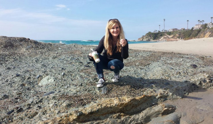 Collecting Sea Gl At Laguna Beach California