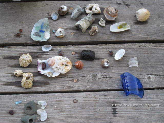A collection of beach treasure on a tabletop, including sea glass and sea shells.