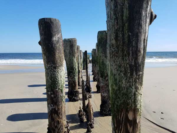 Old wooden pier pilings on Bay Head beach in New Jersey.